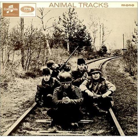 Animal-