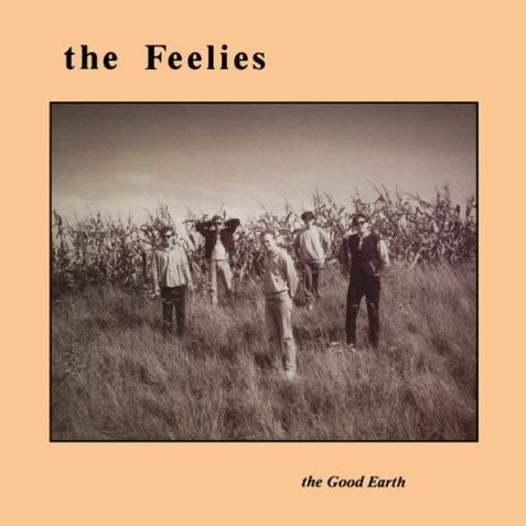 feelis